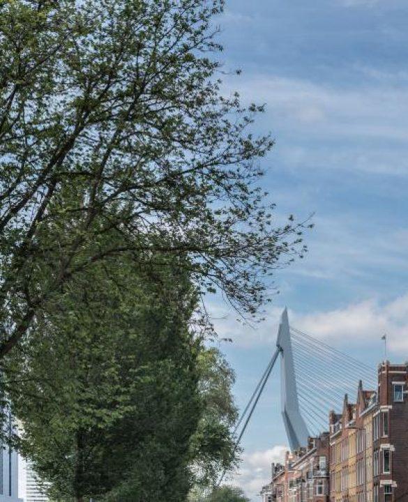 Groen-in-Rotterdam